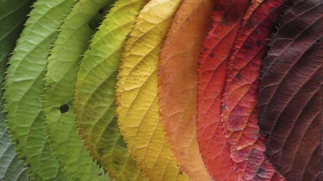 preserving-autumn-leaves-thumbnail-1280×720